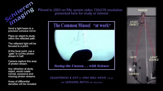 thumvidpost – Common Mussel filter-feeding – Schlieren Imageing – Seeing the Unseen