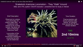 preview-anemone-loco-05
