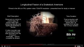 preview-anemone-long-fis-04